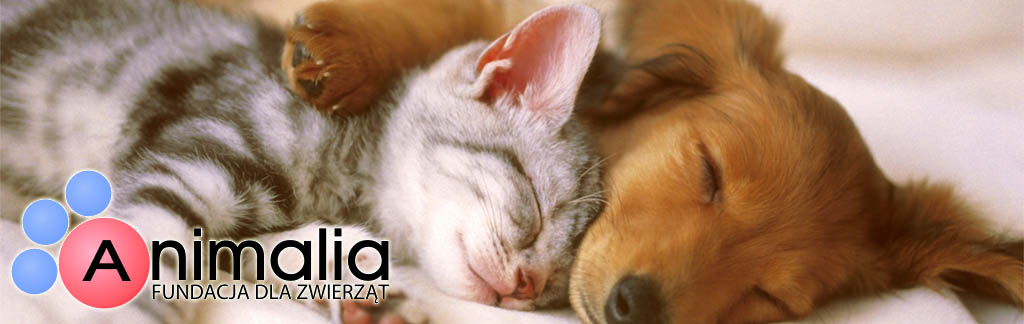 iWadi wspiera Fundację dla Zwierząt Animalia i pomaga zwierzakom